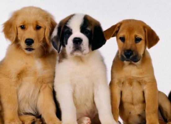 """Interact e Rotary Bisceglie, prima edizione di """"Una notte da cani"""", l'evento dedicato agli amici a quattro zampe"""