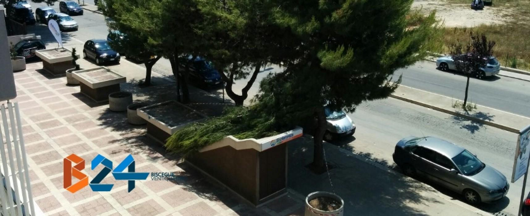 Grosso ramo cade in via San Martino, scattano le lamentele dei residenti/FOTO