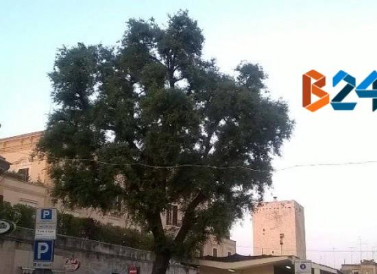 Censimento degli alberi e delle formazioni vegetali monumentali, ecco come partecipare