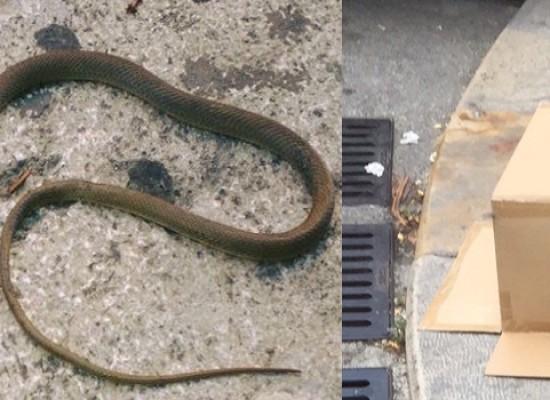 Un serpente e un topo in via Piave tra gli occhi esterrefatti dei passanti