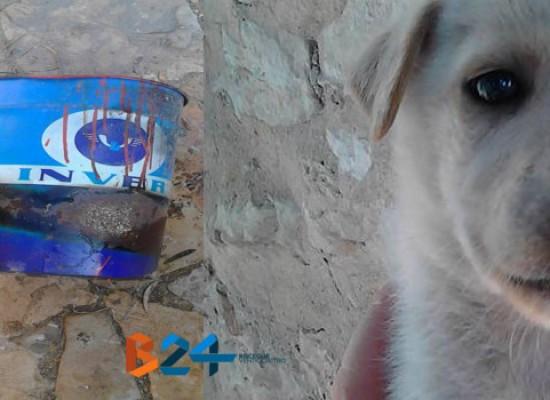 Abbandonati a Bisceglie dei cani in un secchio di vernice, morti due dei tre cuccioli