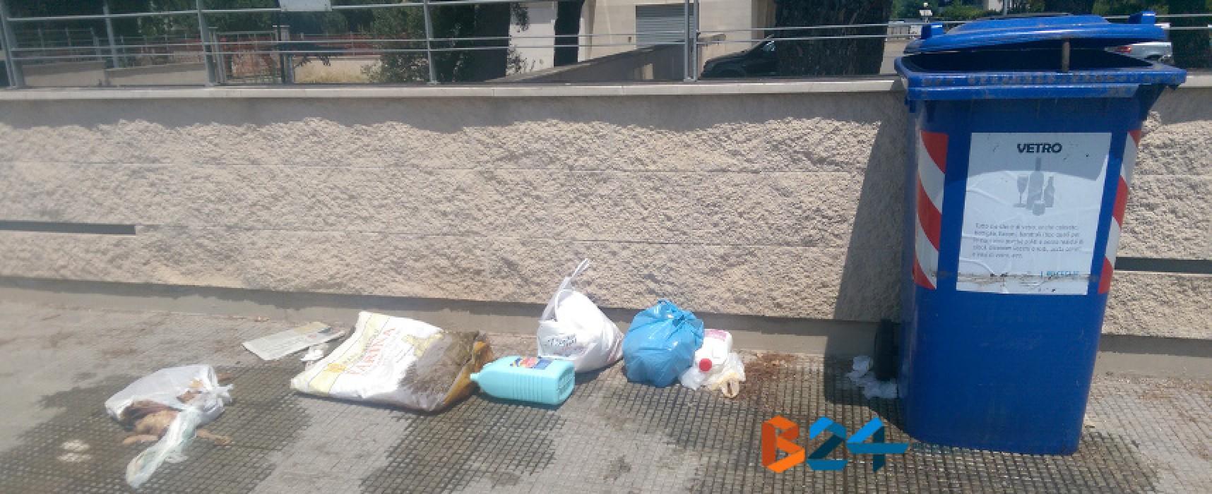 Rifiuti organici in decomposizione accanto al cassonetto del vetro, accade in Stada del Carro