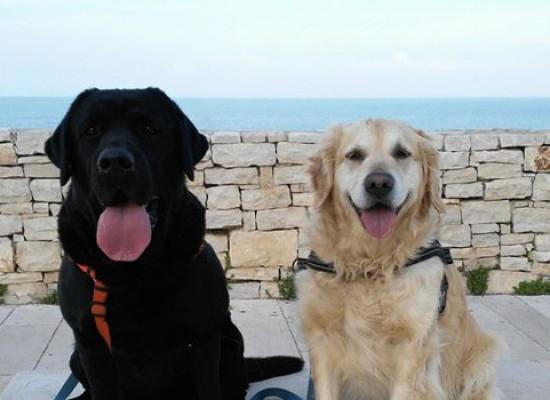 """Spina: """"Sgravi tributari sulla Tari per chi adotterà un cane dal canile comunale"""""""