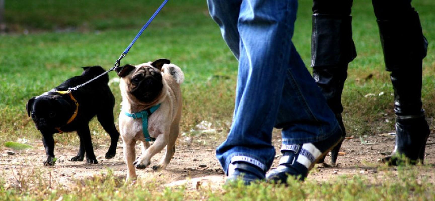 Zona seminario, i residenti chiedono dei cestini dove conferire le deiezioni dei propri cani