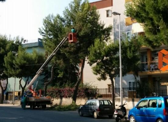 Via Di Vittorio: pino messo in sicurezza, permane il rischio di altri cedimenti nella zona