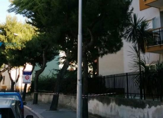 Cede grosso ramo di pino in via Di Vittorio, interviene la Polizia Municipale su nostra segnalazione/FOTO