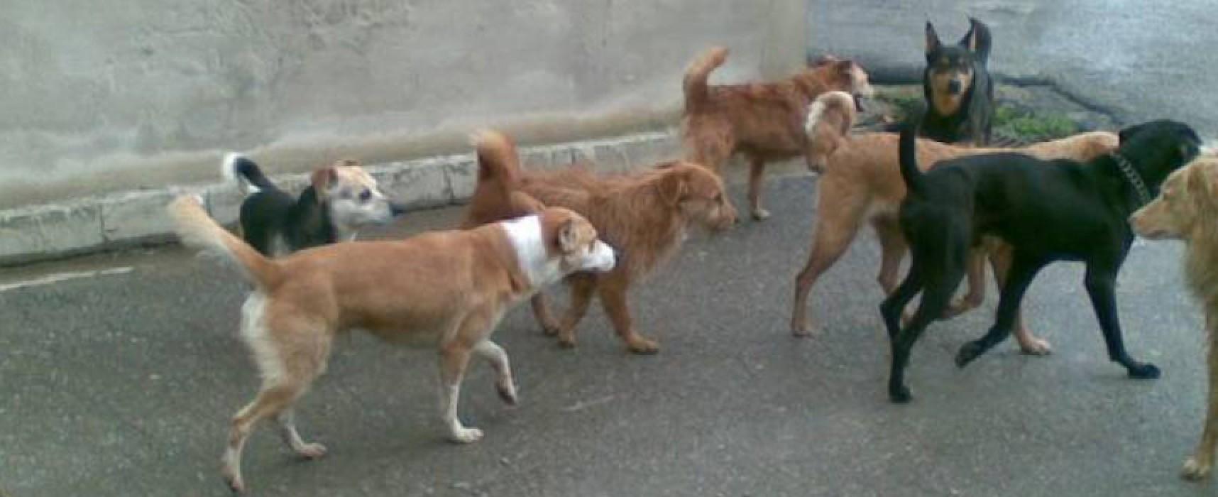 Canile sanitario e rifugio cani randagi, il comune in cerca di nuovi operatori nel settore