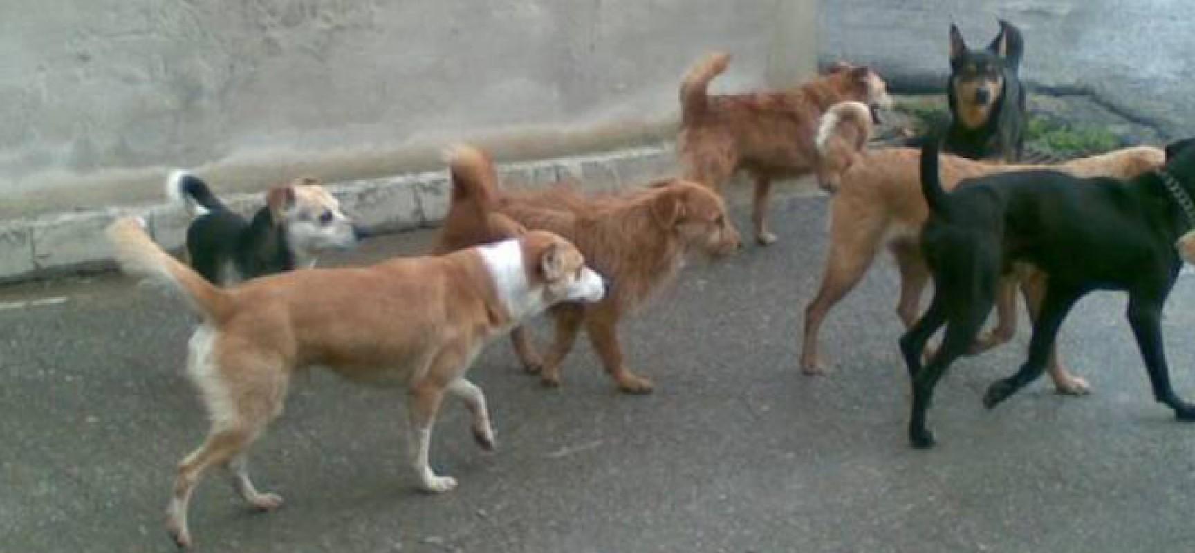 Inseguito in bici da una decina di cani randagi di grossa taglia: la denuncia di un cittadino