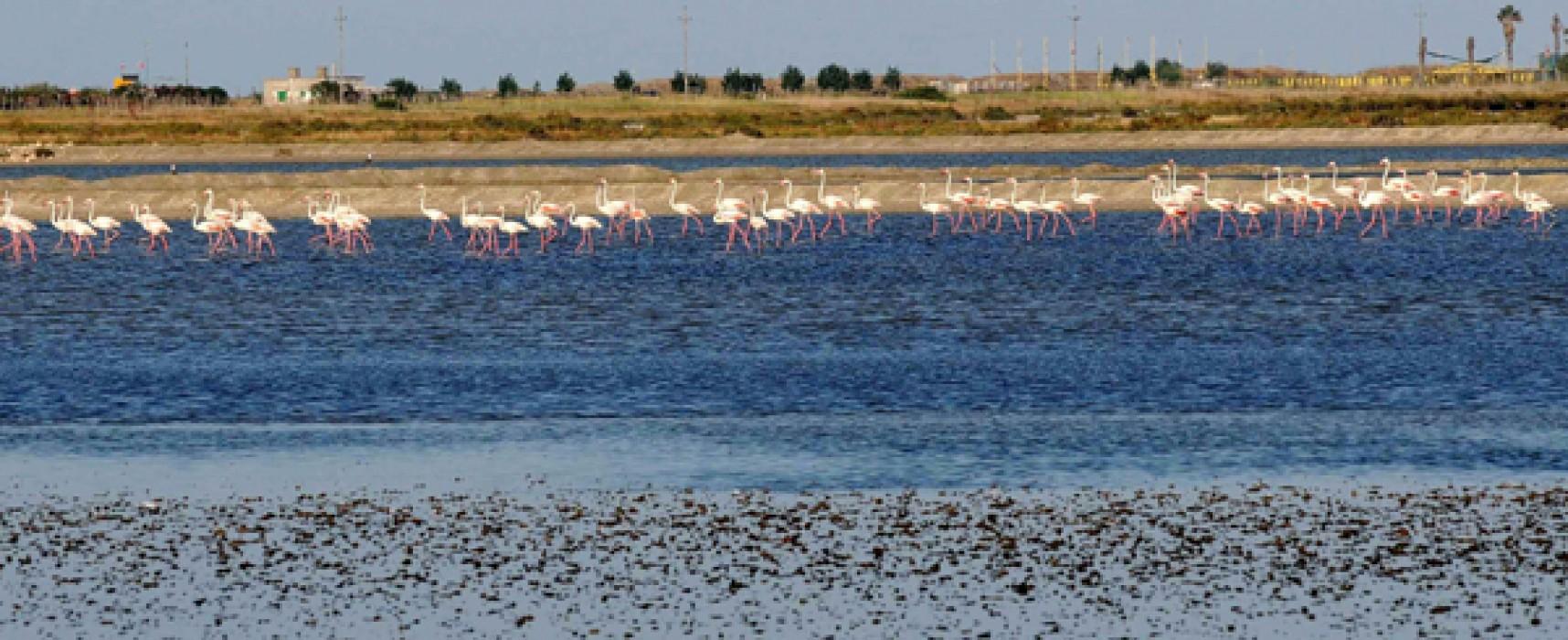 """Biciliae organizza """"Pedalando tra i fenicotteri rosa"""" per il 27 settembre / PROGRAMMA"""