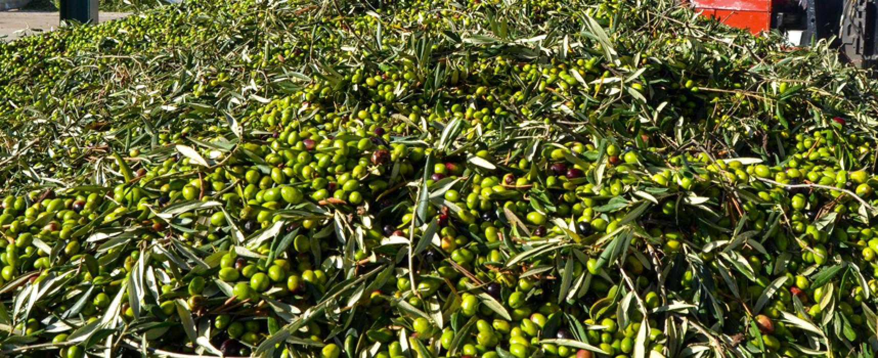 Beccati a rubare tre quintali di olive, arrestati quattro biscegliesi della stessa famiglia