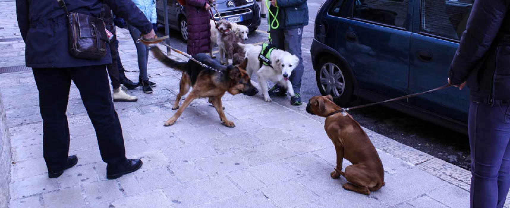 Animali domestici benedetti dal parroco nella chiesa della Madonna di Passavia/FOTO