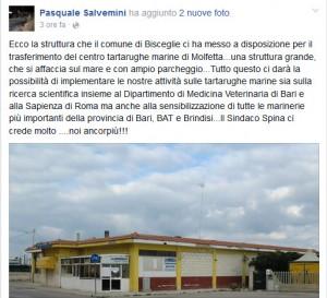 Post centro tartarughe marine trasferimento