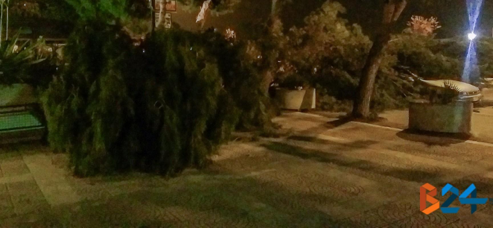 Due grossi rami di pino cedono in via San Martino a causa del forte vento / FOTO