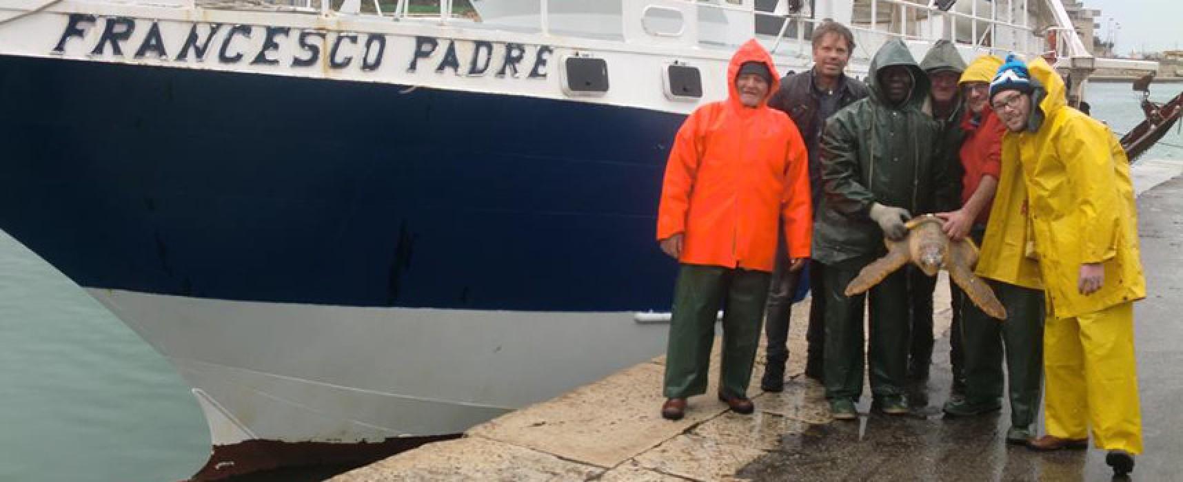 Ben venti tartarughe marine salvate dalla marineria biscegliese in due giorni