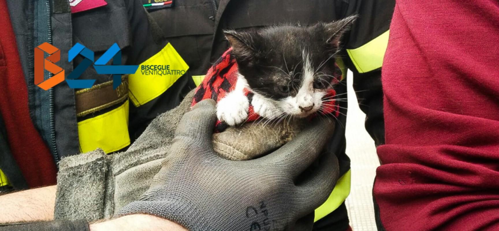 Gattino intrappolato in un tubo di scolo salvato dai vigili del fuoco / FOTO