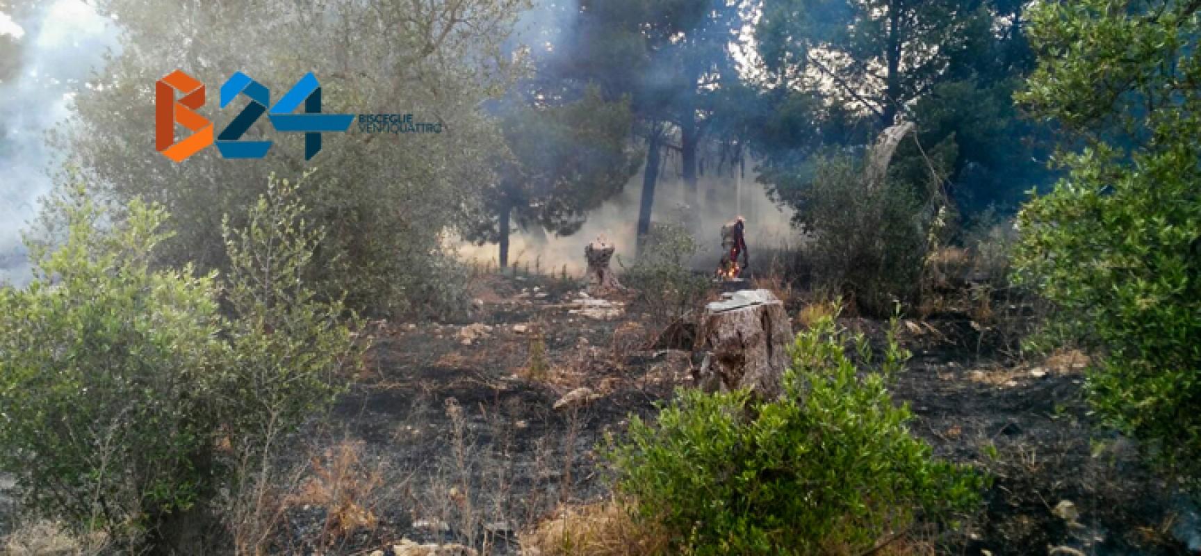 Incendio in un terreno incolto in carrara il Vuolo