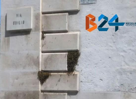 Grosso sciame di api in pieno centro sulla parete di uno stabile / FOTO