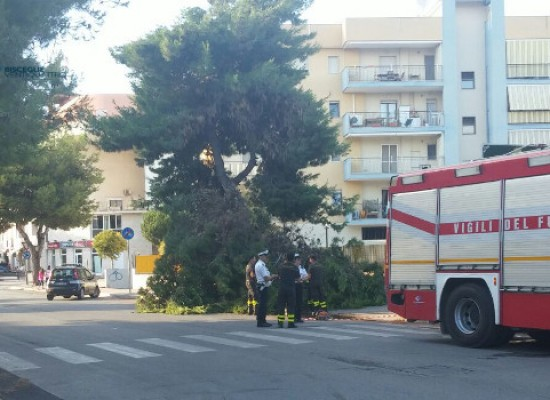 Paura in via Di Vittorio, cede un enorme ramo di pino /FOTO