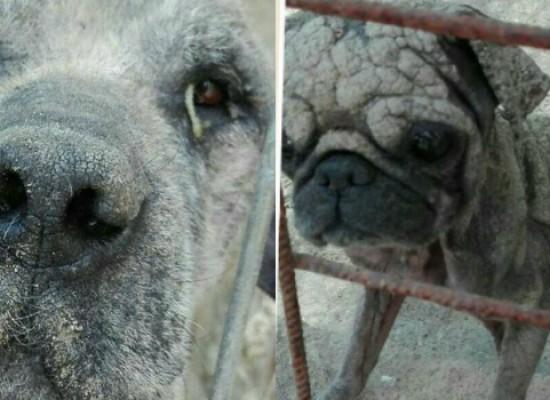 Cani detenuti in un recinto lager in zona Sant'Andrea salvati da Carabinieri e Figli di Nessuno /VIDEO