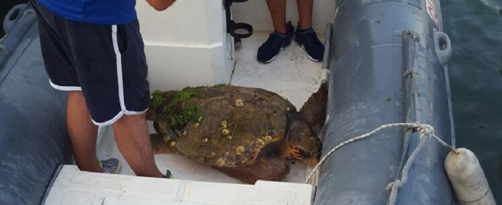 Salvata ieri pomeriggio nelle acque del porto una tartaruga ferita