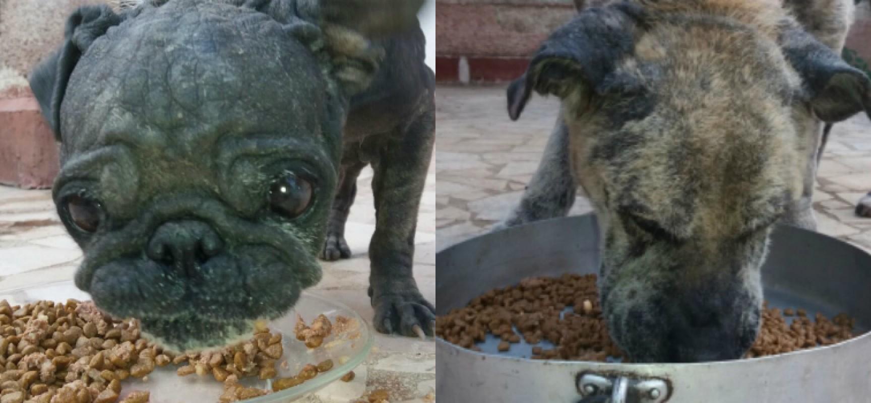 I due cani salvati dal recinto lager di via Sant'Andrea stanno molto meglio / FOTO