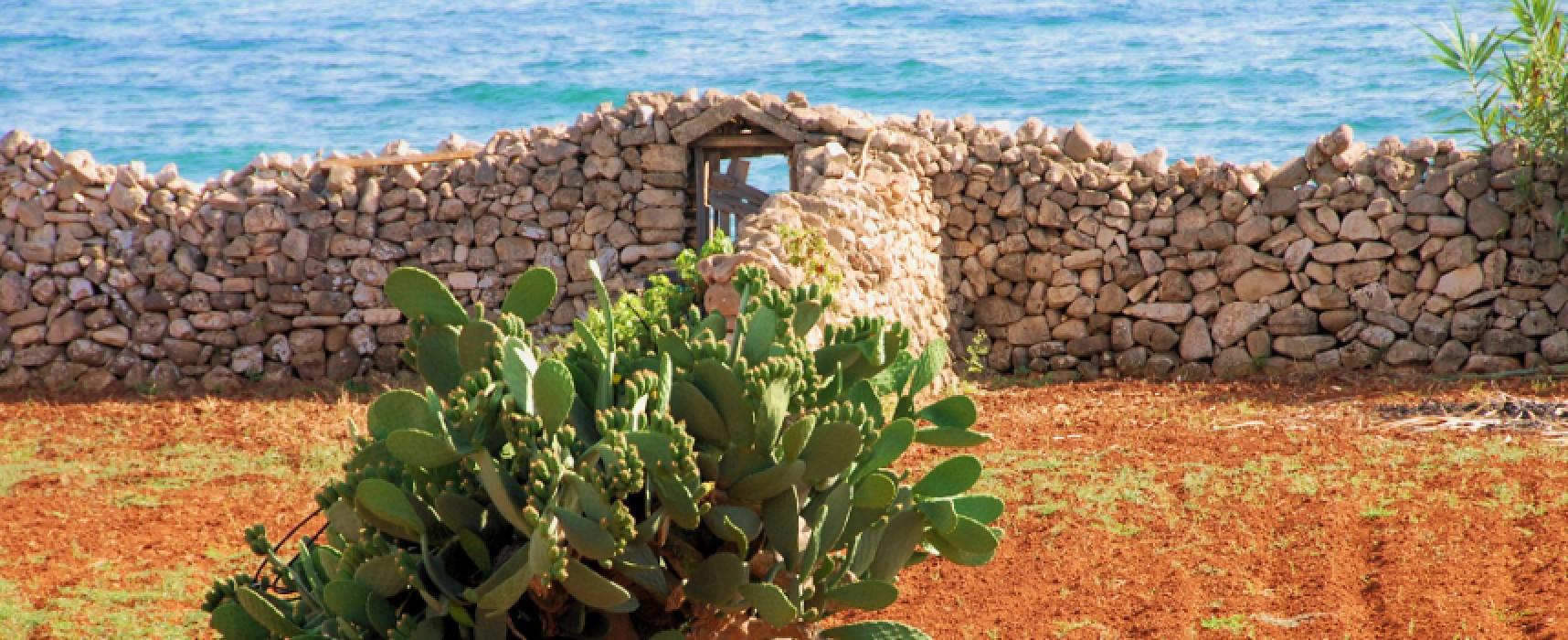 """Ottava edizione per il concorso fotografico """"Passeggiando tra i Paesaggi Geologici della Puglia"""""""