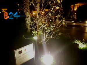 magnolia-cosmai-ottobre-interna