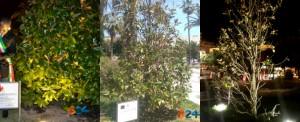 magnolia-sergio-cosmai-evoluzione