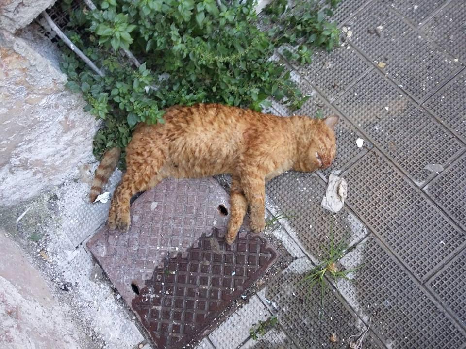 Esche Avvelenate Uccidono Diversi Gatti La Denuncia Dell