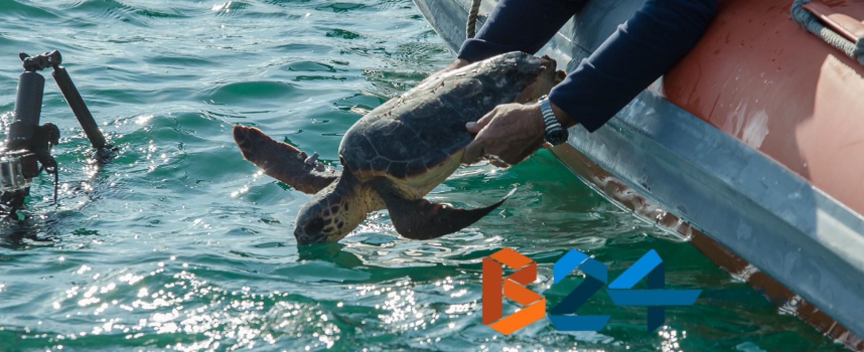 Adrionet, una rete di associazione per il salvataggio delle tartarughe marine