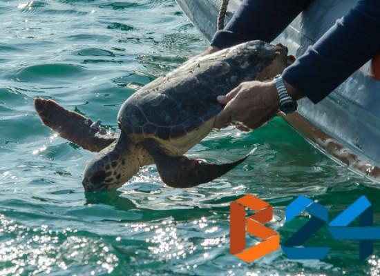 Droni e videocamere per studiare le tartarughe marine lungo le coste di Bisceglie
