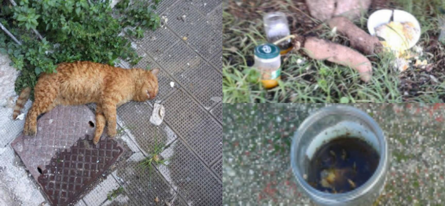 """Esche avvelenate uccidono diversi gatti, la denuncia dell'associazione """"I Figli di nessuno"""""""