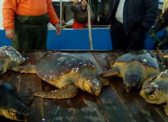 Chiusura da record per il centro di recupero, oltre 400 le tartarughe salvate nel 2016