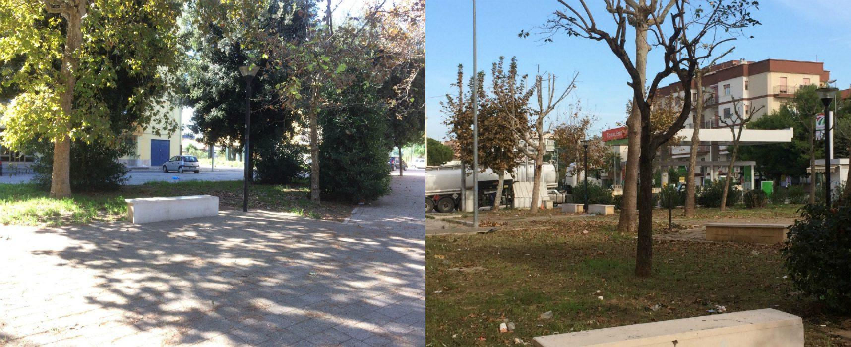 """Bisceglie 5 Stelle: """"Danneggiati 13 alberi di platano su 17 in piazza Salvo D'Acquisto"""""""