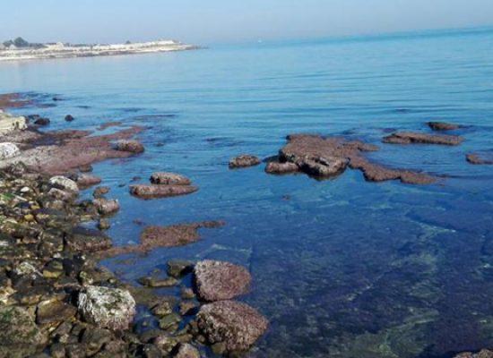 Finanziamenti per i mercati dei prodotti ittici, Gal Ponte Lama dirama bando