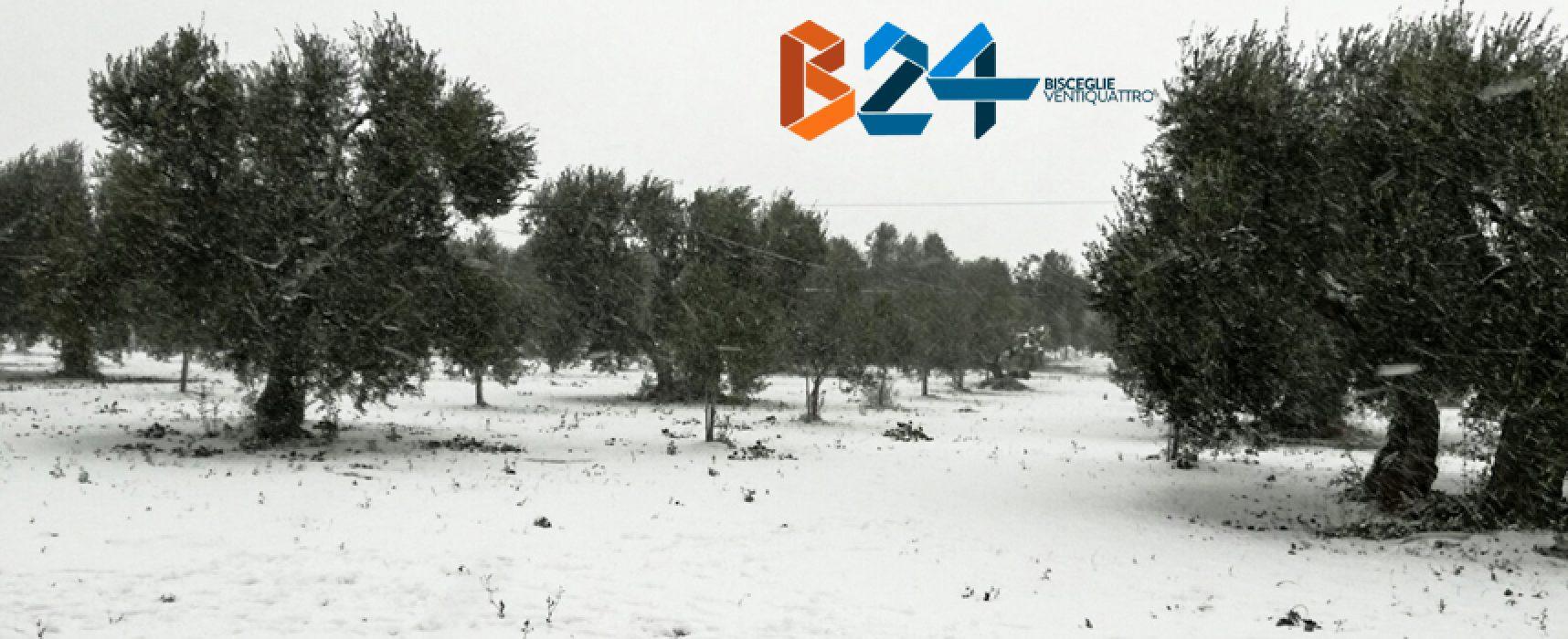 Sindaco chiede lo stato di calamità naturale per la neve di inizio gennaio