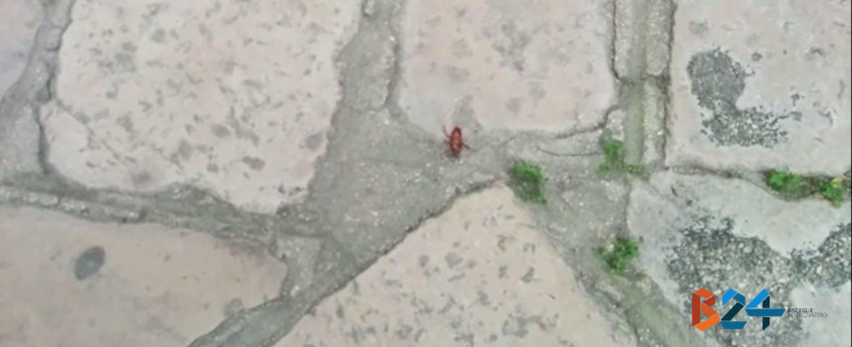 Scarafaggi invadono tratto di via Imbriani / VIDEO