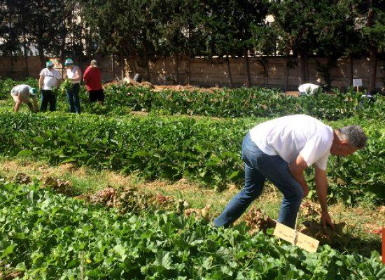 Grinlab: orto urbano e cantiere di integrazione sociale
