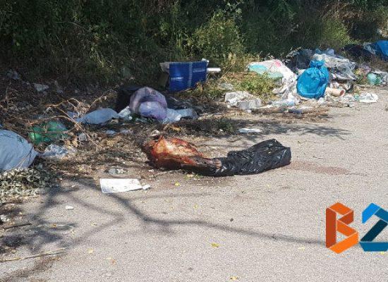 Testa di cavallo tra i rifiuti in Strada del Carro