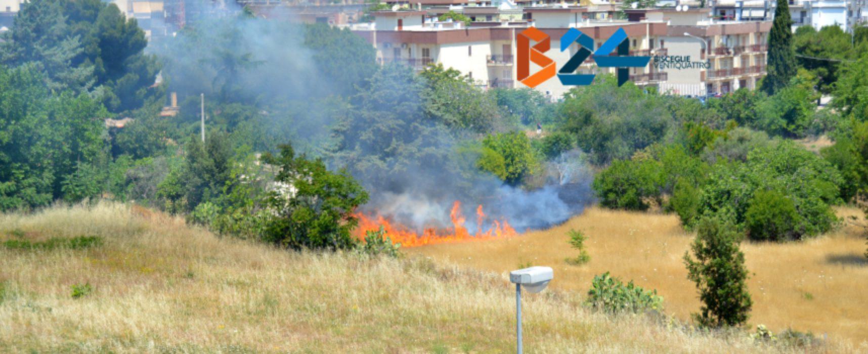 Incendio in alcuni campi del quartiere Sant'Andrea