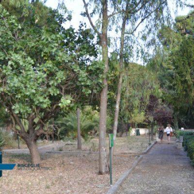 "Al Giardino Botanico l'iniziativa ""Bisceglie in mostra"" lanciata da Biscegliegram"