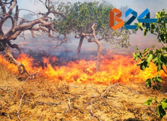 Domenica rovente sul fronte incendi: fiamme vicino la statale 16 e in via vecchia Corato