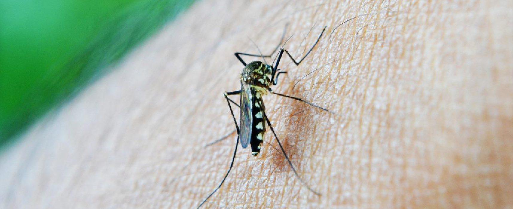 Nuovi interventi di disinfestazione contro mosche e zanzare in tutta la città / DETTAGLI