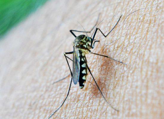 Questa notte disinfestazione contro mosche e zanzare in tutta la città