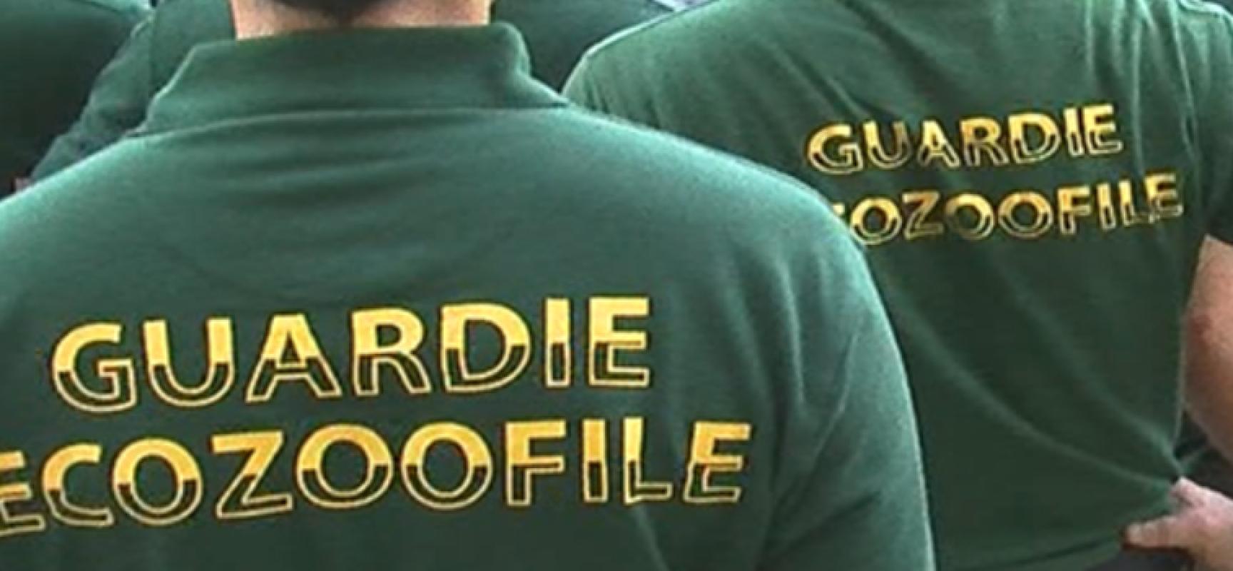 Stipulata convezione tra guardie eco-zoofile e comune di Bisceglie