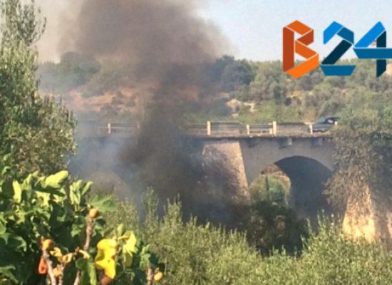 Incendio sotto il ponte Lama, a fuoco sterpaglie e alberi / FOTO
