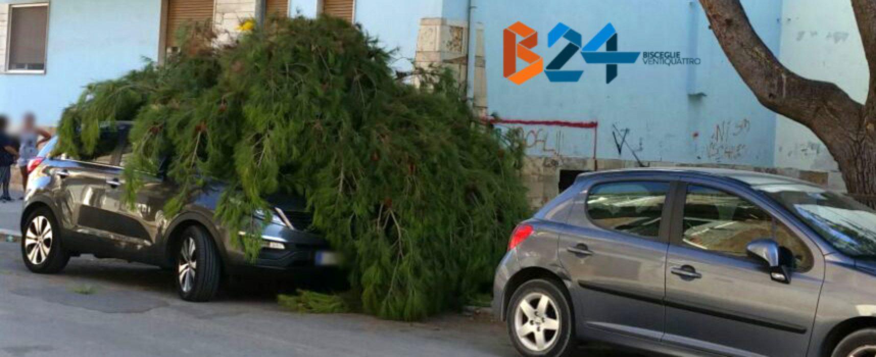Grosso ramo di pino cade su autovettura in via Pascoli, nessun ferito / FOTO