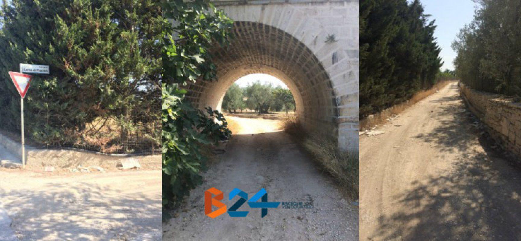 Percorso ciclabile Bisceglie-Ruvo, approvato il progetto del gruppo Ripalta area protetta