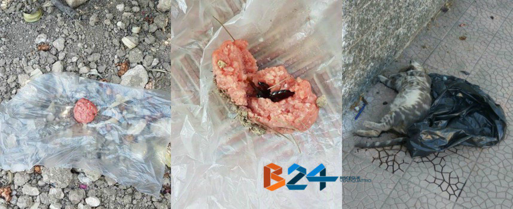 Esche di carne contenenti pezzi di vetro ritrovate nel quartiere Sant'Andrea