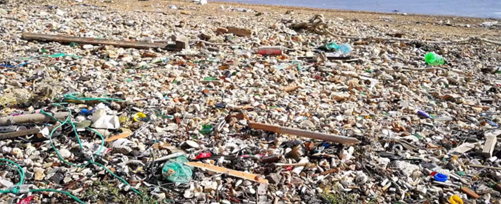 """Cittadini a 5 Stelle in MoVimento: """"Vogliamo un mare pieno di pesci o di rifiuti?"""" / VIDEO"""